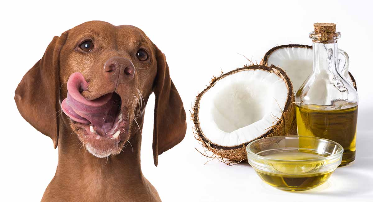 Coconut Oil Benefits for Dogs!